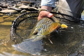 Fly fishing lessons in Devon
